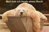 baer2