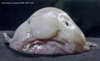 blobfish_2