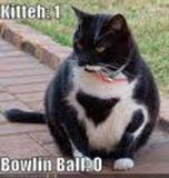 bowlingcat